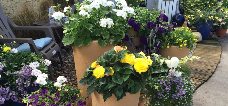 Stewart Garden inspires Scotsdales Garden Centre to boost planter sales