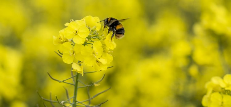The Principle advice on how property agents can help save urban bees